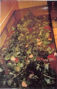1995 LA SONRISA DE LOS CARACOLES (2) mi corazon está en el paisaje