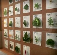 Diario de un jardinero vago - Mayo