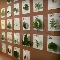 Diario de un jardinero vago